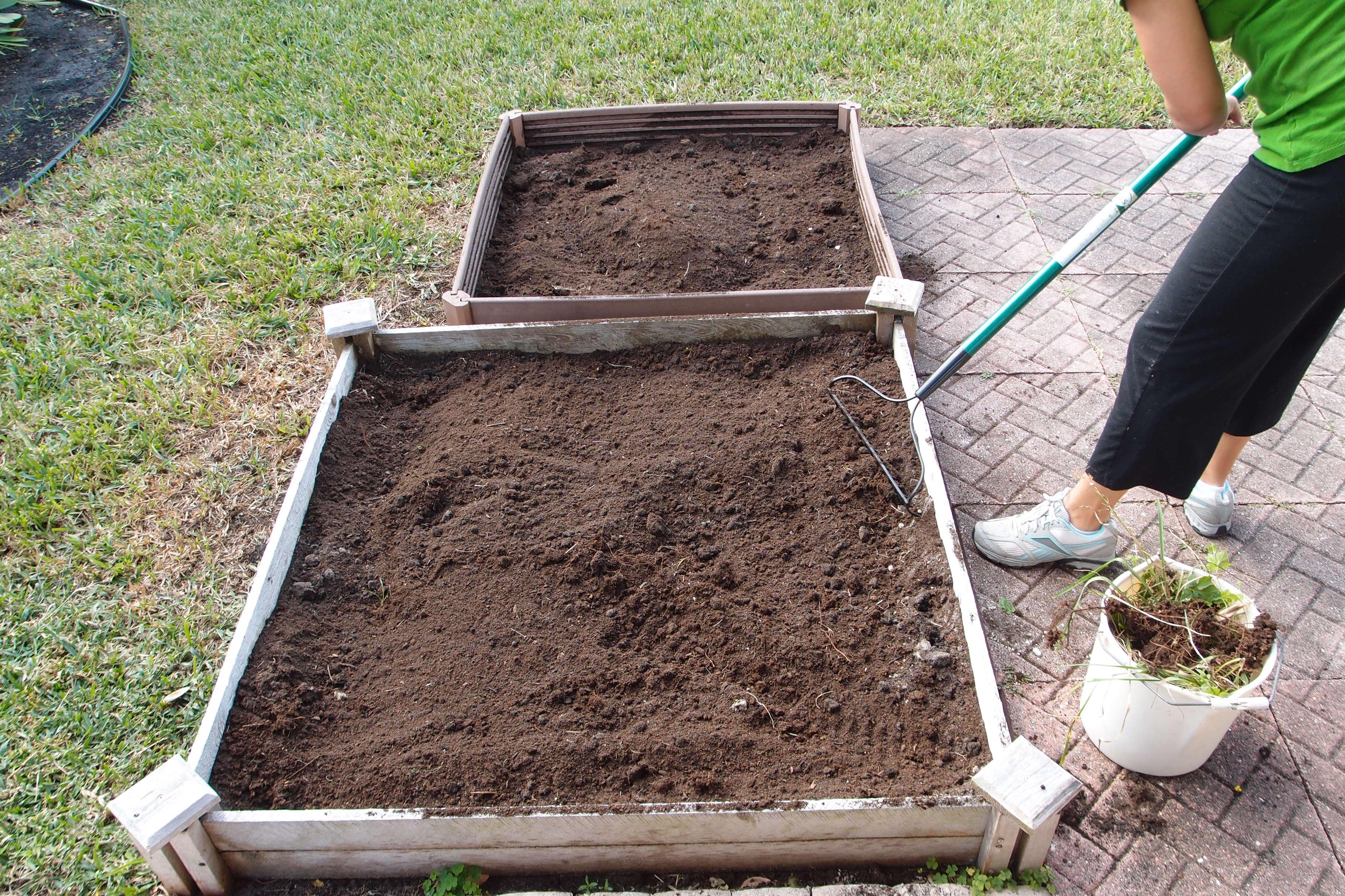 starting our florida winter garden 2012 the florida garden